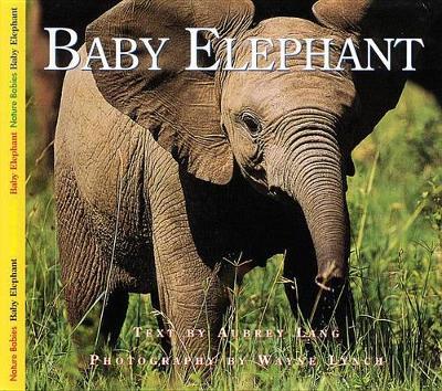 Baby Elephant (Hardback)