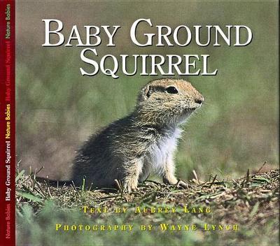 Baby Ground Squirrel (Paperback)