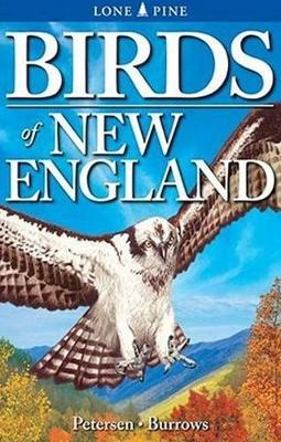 Birds of New England (Paperback)