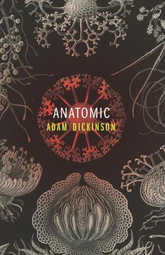 Anatomic (Paperback)
