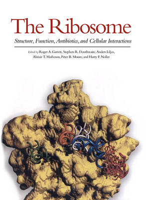 The Ribosome: Structure, Function, Antibiotics and Cellular Interactions (Hardback)