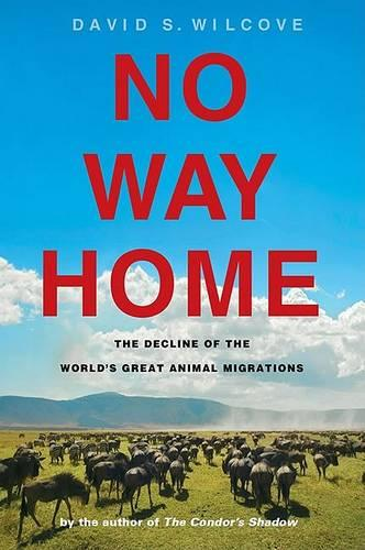 No Way Home: The Decline of the World's Great Animal Migrations (Hardback)