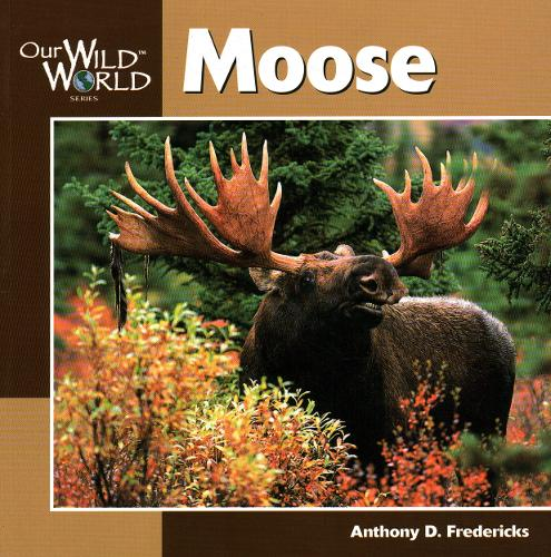 Moose - Our Wild World (Paperback)