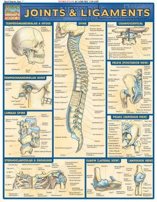 Joints & Ligaments