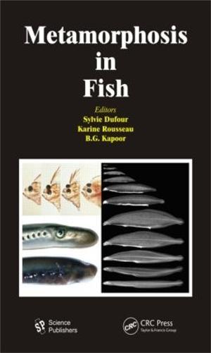 Metamorphosis in Fish (Hardback)