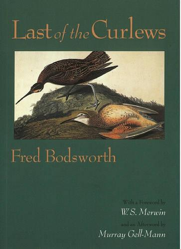 Last of the Curlews (Paperback)