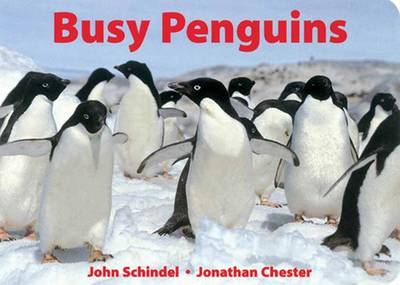 Busy Penguins - A Busy Book (Board book)