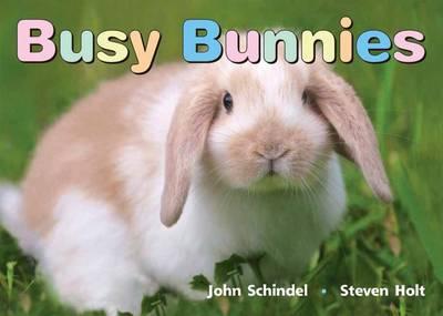 Busy Bunnies (Board book)