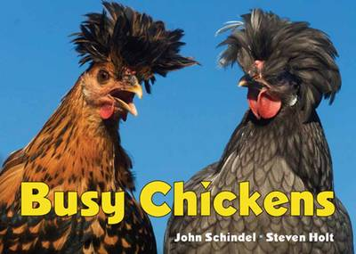 Busy Chickens - Busy Series (Board book)