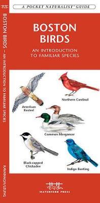 Boston Birds: A Folding Pocket Guide to Familiar Species - Pocket Naturalist Guide Series