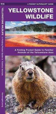 Yellowstone Wildlife: A Folding Pocket Guide to Familiar Animals of the Yellowstone Area - Pocket Naturalist Guide Series