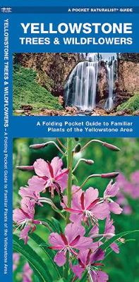 Yellowstone Trees & Wildflowers: A Folding Pocket Guide to Familiar Plants of the Yellowstone Area - Pocket Naturalist Guide Series