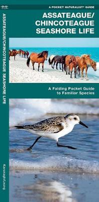 Assateague/Chincoteague Seashore Life: A Folding Pocket Guide to Familiar Species - Pocket Naturalist Guide Series