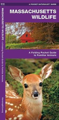 Massachusetts Wildlife: A Folding Pocket Guide to Familiar Species - Pocket Naturalist Guide Series