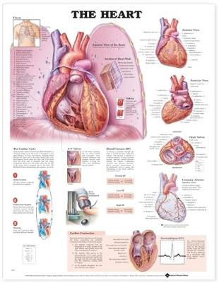 The Heart Anatomical Chart (Wallchart)