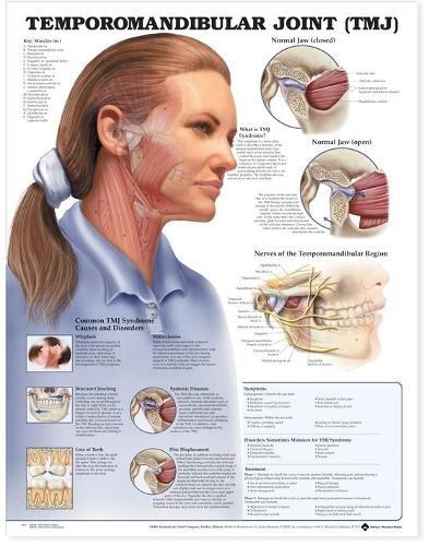 Temporomandibular Joint (TMJ) Anatomical Chart (Wallchart)