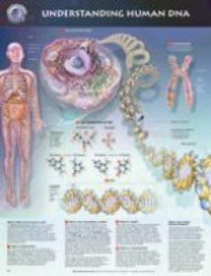Understanding DNA (Wallchart)