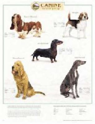 Canine Hound Group (Wallchart)