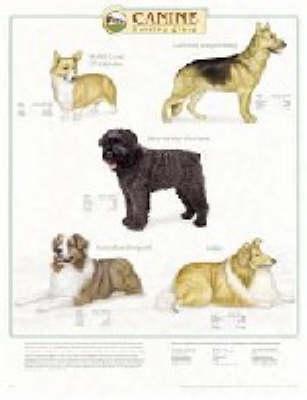 Canine Herding Group (Wallchart)