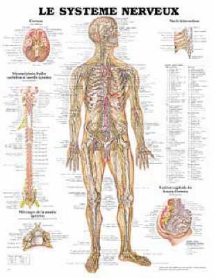 Le Systeme Nerveux (Wallchart)