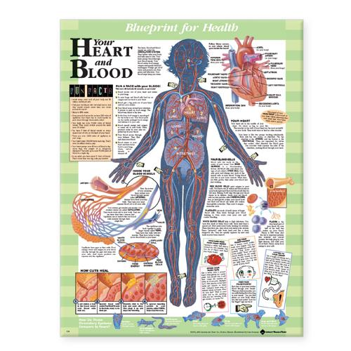 Blueprint for Health Your Heart and Blood Chart (Wallchart)