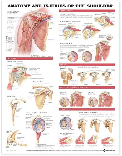 Anatomy and Injuries of the Shoulder Anatomical Chart (Wallchart)