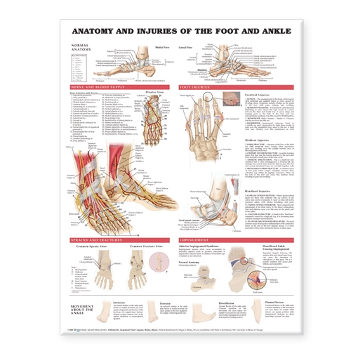 Anatomy and Injuries of the Foot and Ankle (Wallchart)