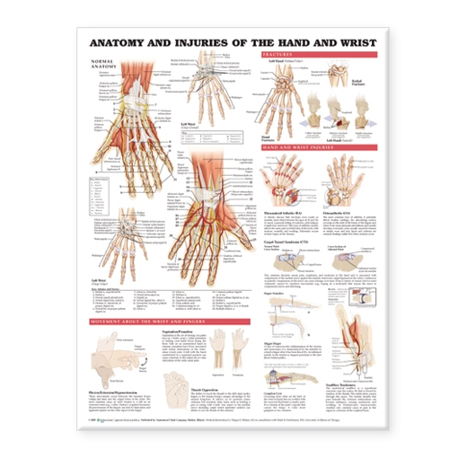 Anatomy and Injuries of the Hand and Wrist Anatomical Chart (Wallchart)