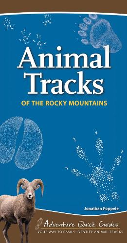 Animal Tracks of the Rocky Mountains (Spiral bound)