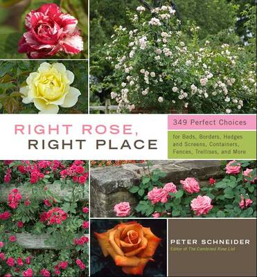 Right Rose, Right Place (Hardback)