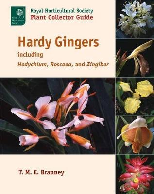Hardy Gingers, Including Hedychium, Roscoea, and Zingiber (Paperback)