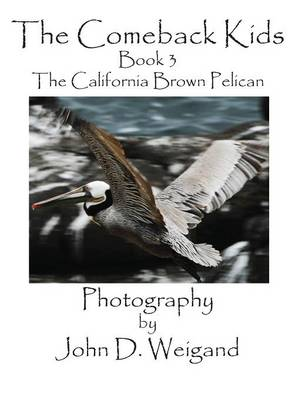 The Comeback Kids, Book 3, the California Brown Pelican (Hardback)
