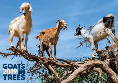 Goats in Trees 2019 Calendar (Calendar)
