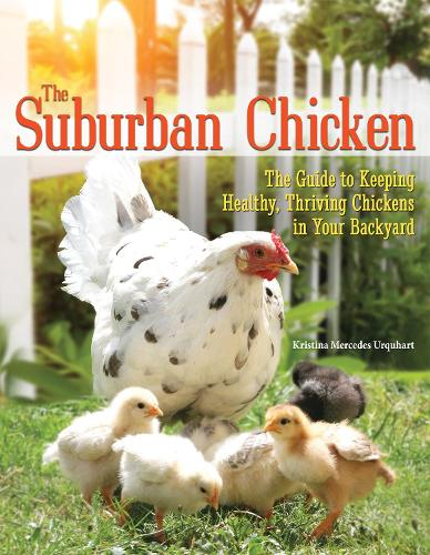 The Suburban Chicken: The Guide to Keeping Healthy, Thriving Chickens in Your Backyard (Paperback)