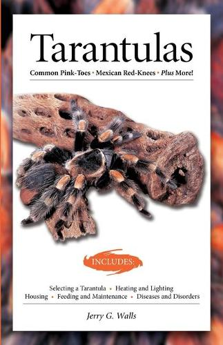 Tarantulas (Advanced Vivarium Systems) (Paperback)