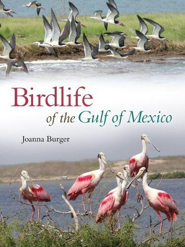 Birdlife of the Gulf of Mexico - Harte Research Institute for Gulf of Mexico Studies Series (Hardback)