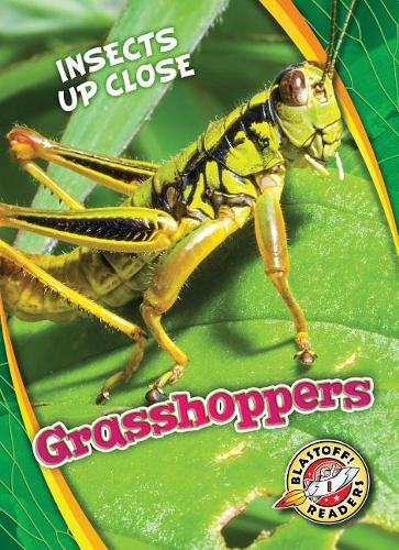 Grasshoppers - Insects Up Close (Hardback)