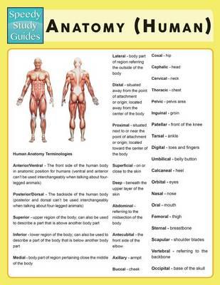 Anatomy (Human) (Speedy Study Guide) (Paperback)