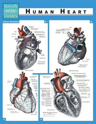 Human Heart (Speedy Study Guide) (Paperback)