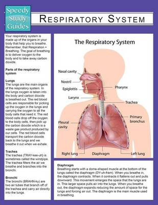 Respiratory System (Speedy Study Guide) (Paperback)