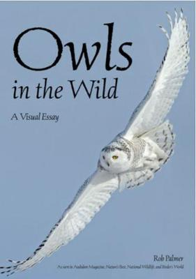 Owls In The Wild: A Visual Essay (Paperback)