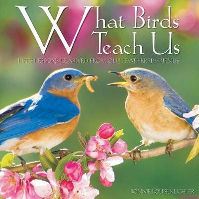 What Birds Teach Us (Hardback)
