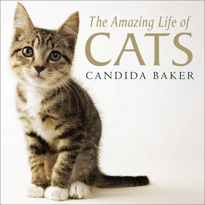 The Amazing Life of Cats (Paperback)