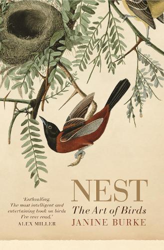 Nest: The art of birds (Paperback)