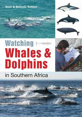 Watching Whales & Dolphins in Southern Africa (Paperback)