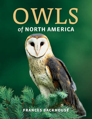 Owls of North America (Paperback)