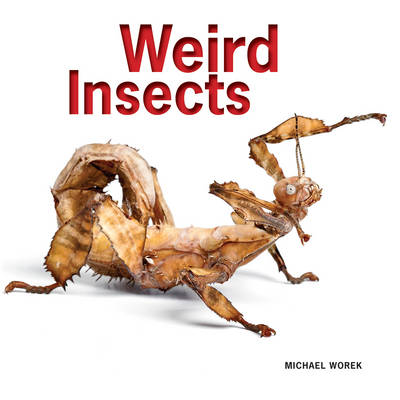 Weird Insects (Paperback)