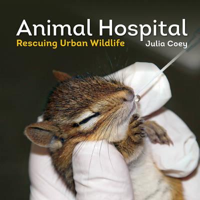 Animal Hospital: Rescuing Urban Wildlife (Paperback)