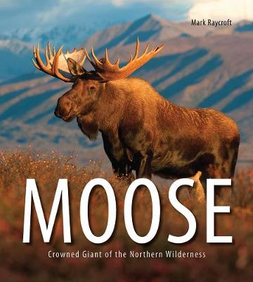 Moose: Crowned Giant of the Northern Wilderness (Paperback)