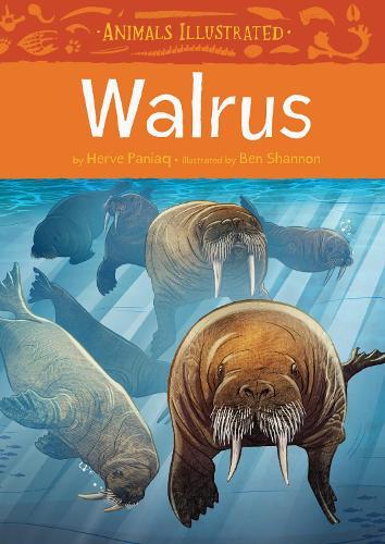 Animals Illustrated: Walrus - Animals Illustrated (Hardback)
